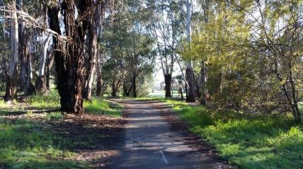 Walking the western edge of Lake Ginninderra