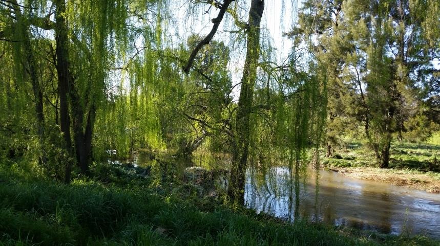 Ginninderra Creek in Melba