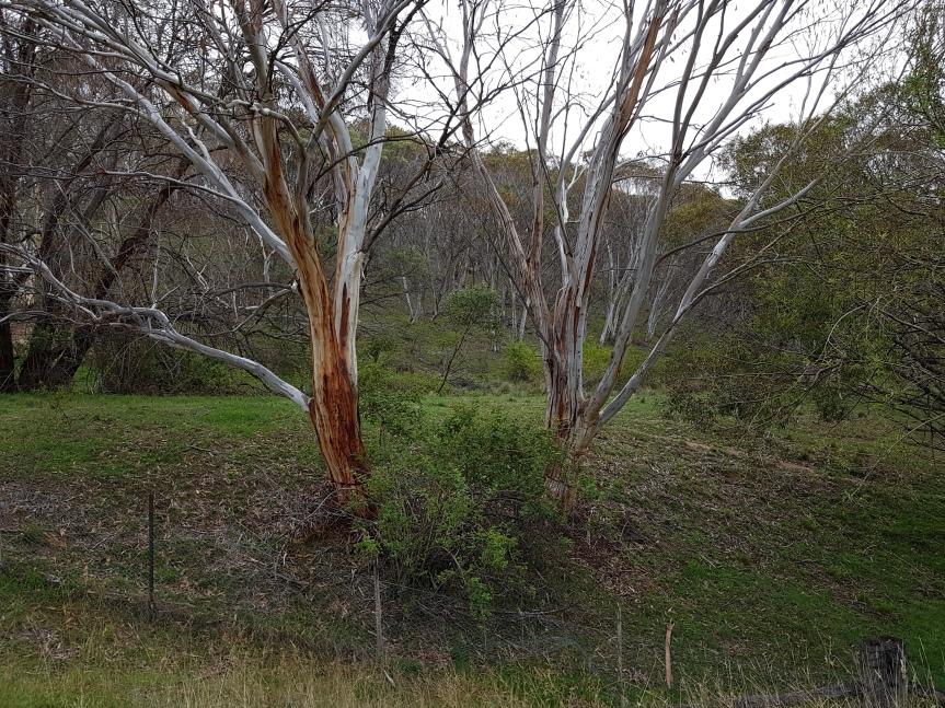 Adaminaby, NSW