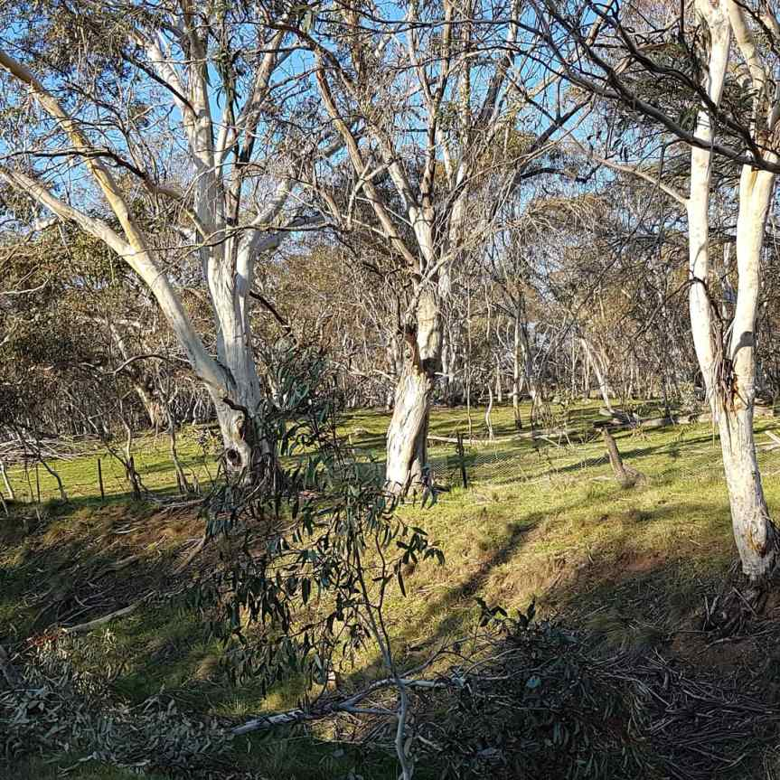 Adaminaby, NSW 3/10/2020