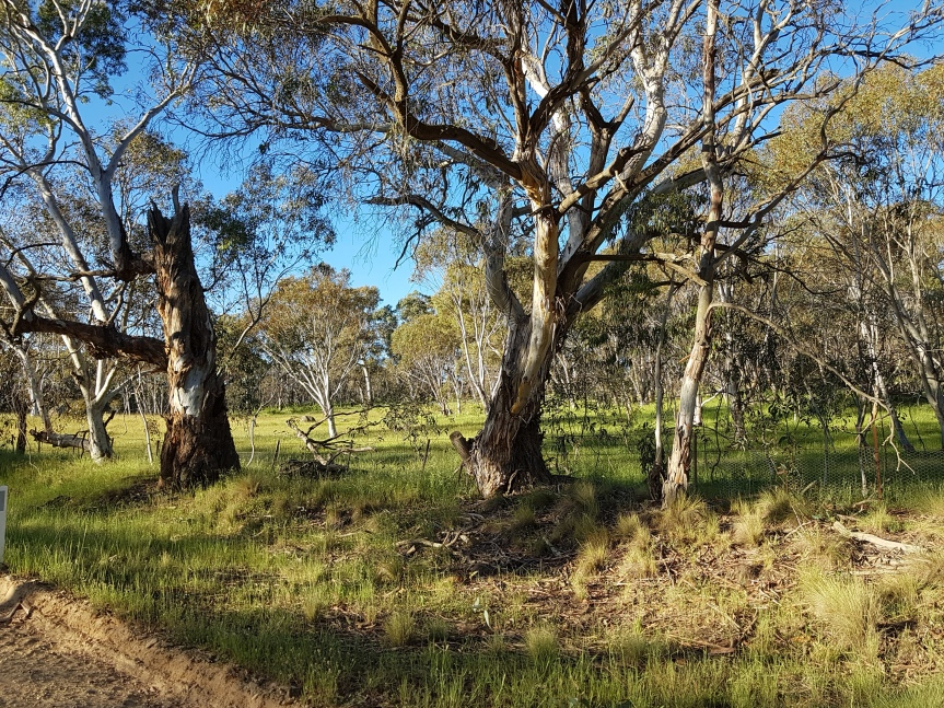 Adaminaby, NSW 21/11/2020